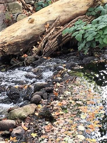 ripples bottom mill pond