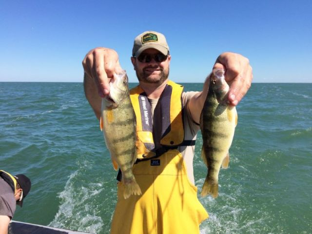 Yellow_perch_Saginaw_Bay_survey