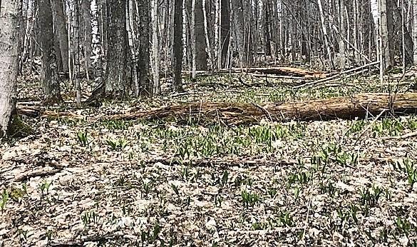 Ramps carpet forest floor